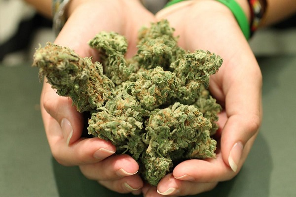 Take weed in your hands
